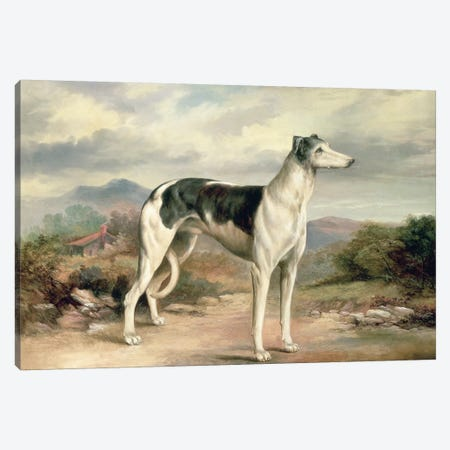 A Greyhound in a hilly landscape Canvas Print #BMN546} by James Henry Beard Canvas Wall Art