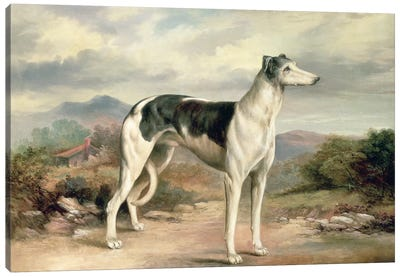 A Greyhound in a hilly landscape Canvas Art Print