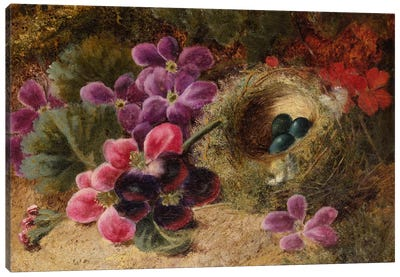 A Bird's Nest and Geraniums  Canvas Art Print
