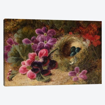 A Bird's Nest and Geraniums  Canvas Print #BMN5497} by Oliver Clare Art Print