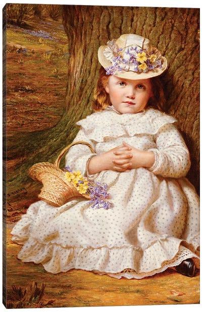 Primroses and Bluebells  Canvas Art Print