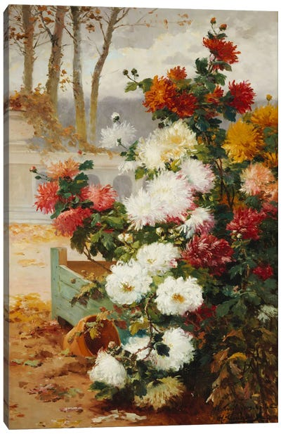 Chrysanthemums in a Walled Garden Canvas Art Print