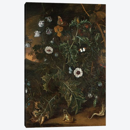 Thistles, brambles, poppies and other plants  Canvas Print #BMN5567} by Matthias Withoos Canvas Print
