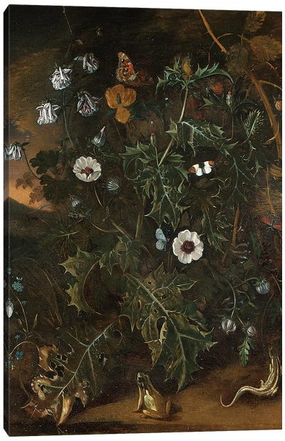 Thistles, brambles, poppies and other plants  Canvas Art Print