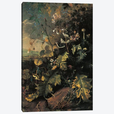 Forest floor with butterflies and lizards  Canvas Print #BMN5569} by Matthias Withoos Canvas Art