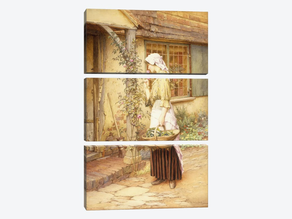 The Sweetest Rose  by Charles Edward Wilson 3-piece Canvas Art Print