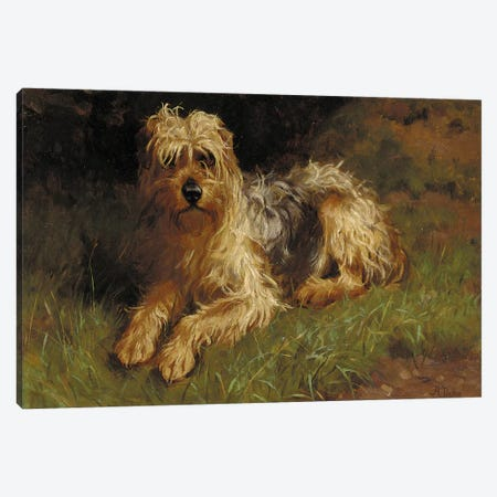 Soft Coated Wheaten Terrier  Canvas Print #BMN5796} by Alfred Duke Canvas Art