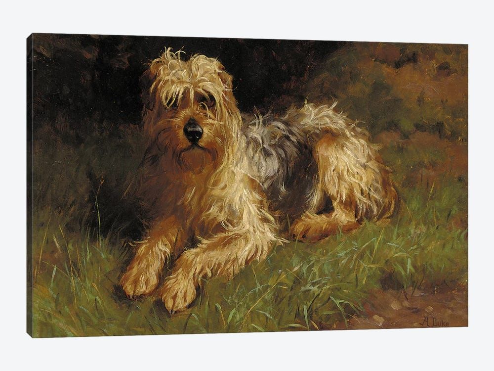 Soft Coated Wheaten Terrier  by Alfred Duke 1-piece Canvas Art Print
