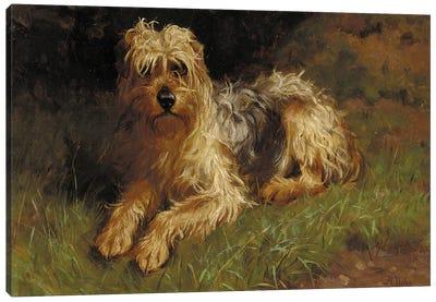Soft Coated Wheaten Terrier  Canvas Art Print