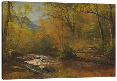 Brook in woods  Canvas Art Print