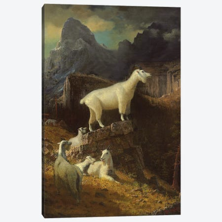 Rocky Mountain Goats, c.1885  Canvas Print #BMN5818} by Albert Bierstadt Canvas Artwork