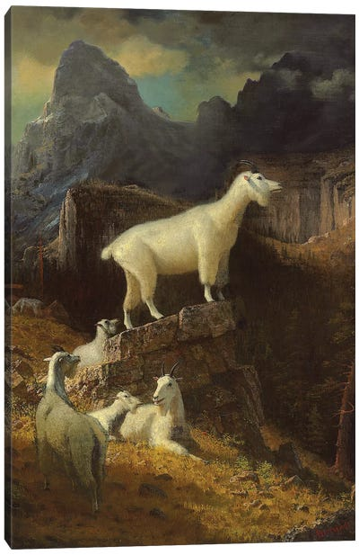 Rocky Mountain Goats, c.1885  Canvas Art Print