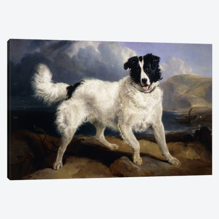 A Portrait of Neptune, 1824  Canvas Print #BMN5952} by Sir Edwin Landseer Canvas Print