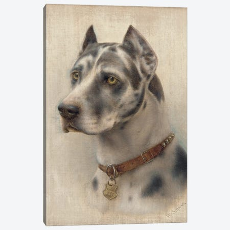 The Head of a Doberman  Canvas Print #BMN5969} by Wilhelm Schwar Canvas Wall Art