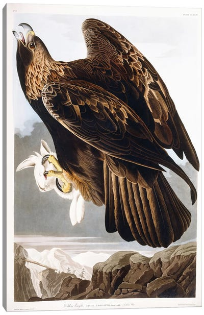 Golden Eagle, 1833 Canvas Art Print