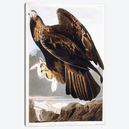 Golden Eagle, 1833  Canvas Print #BMN6021} by John James Audubon Art Print