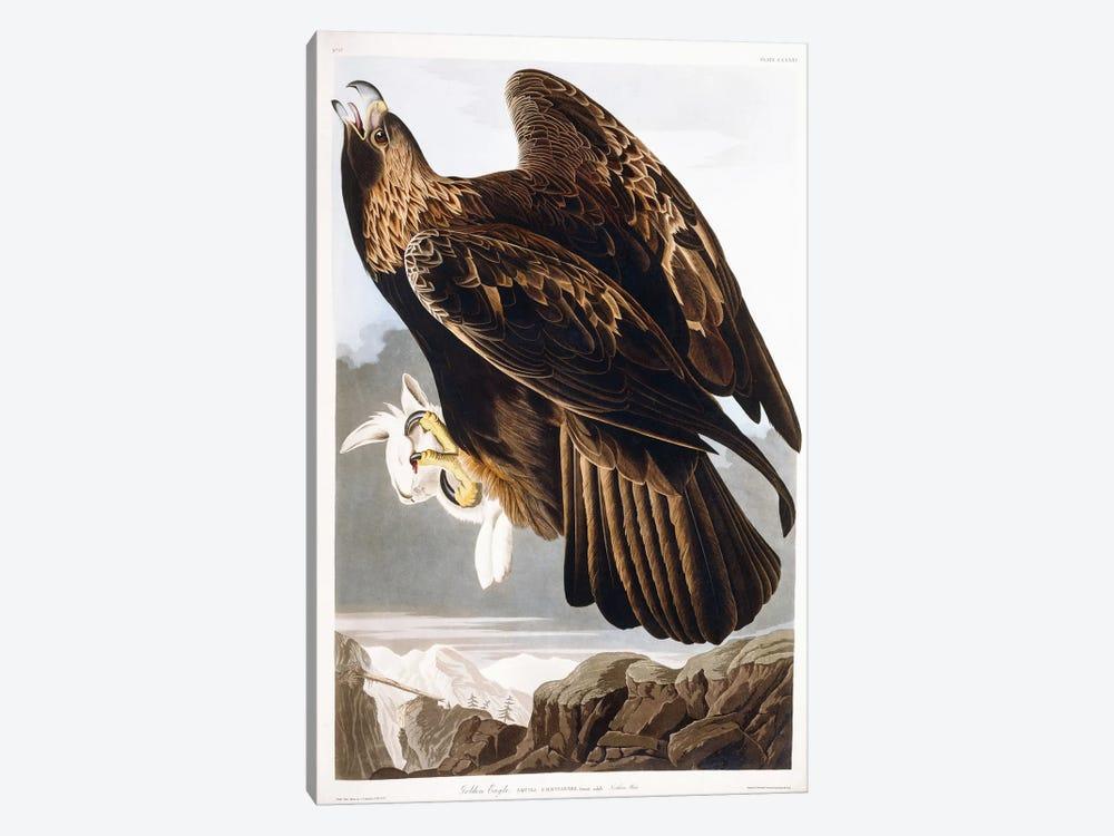 Golden Eagle, 1833  by John James Audubon 1-piece Canvas Artwork