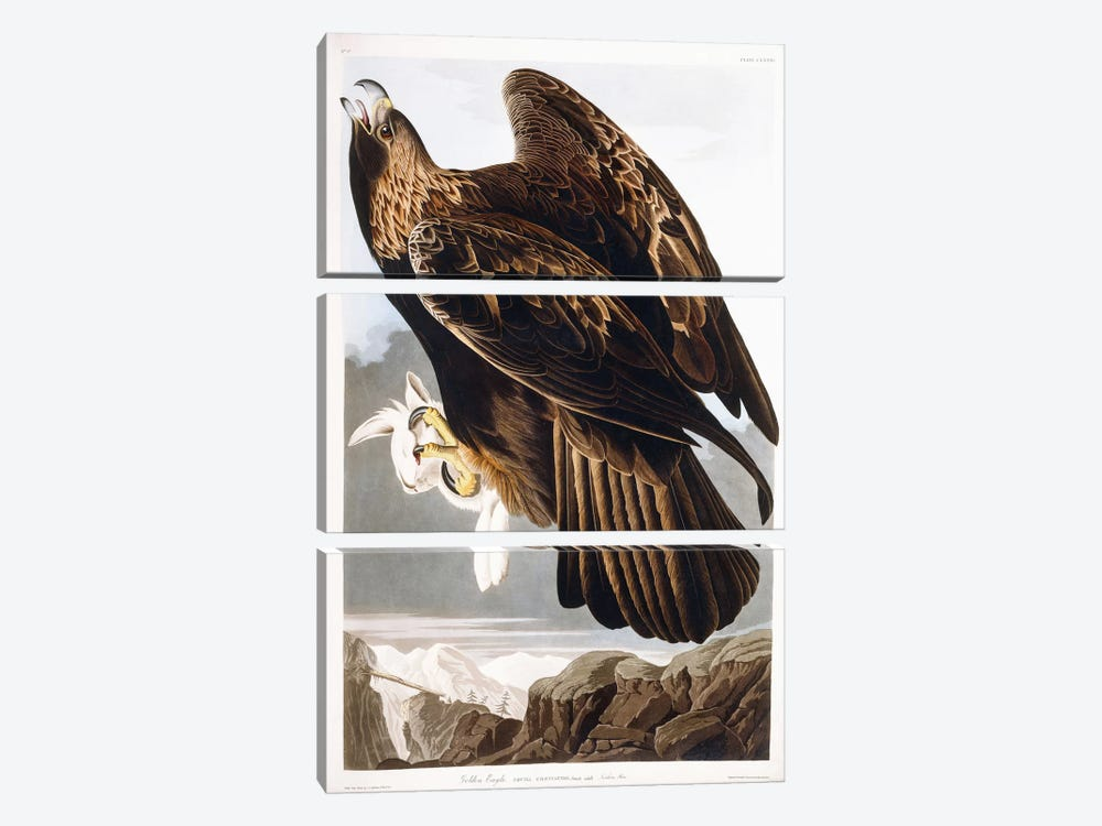 Golden Eagle, 1833  by John James Audubon 3-piece Canvas Art