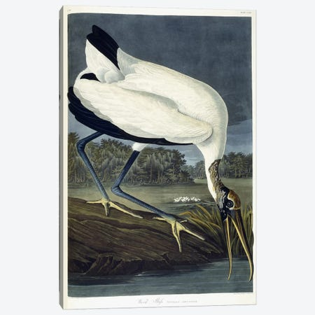 Wood Ibis, 1834  Canvas Print #BMN6023} by John James Audubon Canvas Art Print