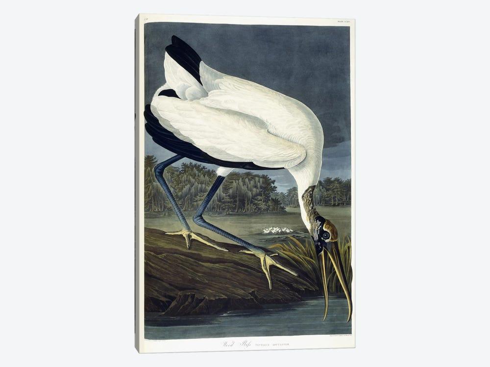 Wood Ibis, 1834  by John James Audubon 1-piece Canvas Wall Art
