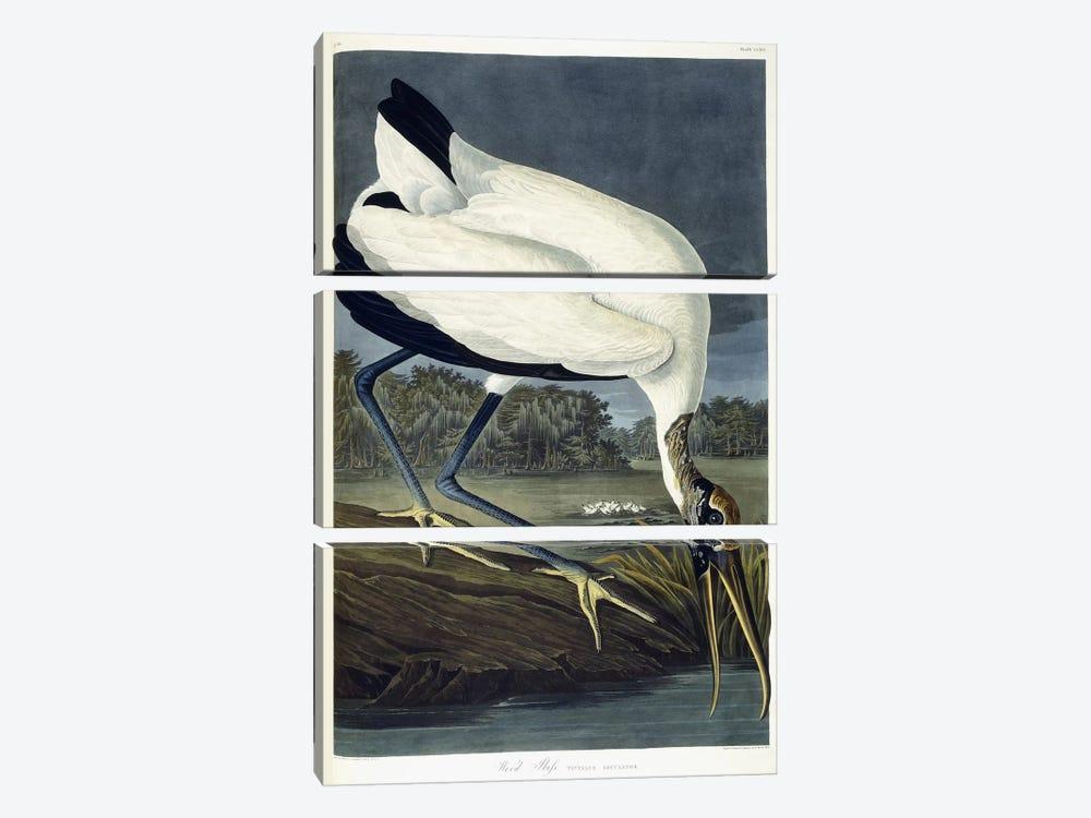 Wood Ibis, 1834  by John James Audubon 3-piece Canvas Wall Art
