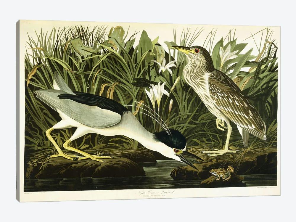 Night Heron or Lua Bird, 1835  by John James Audubon 1-piece Canvas Art Print