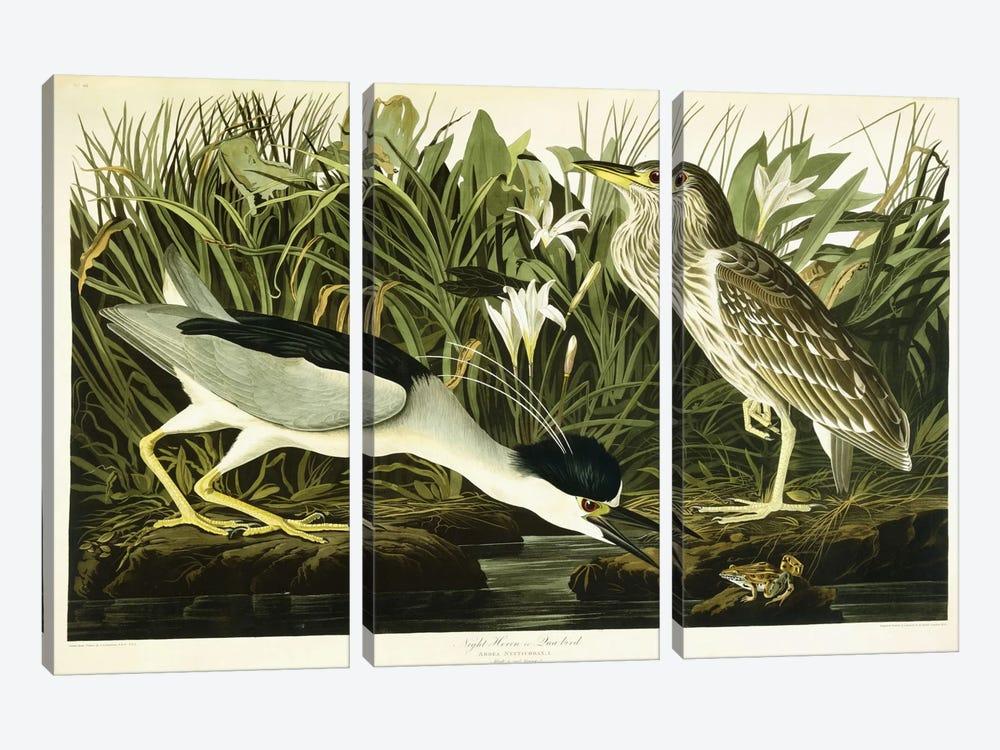 Night Heron or Lua Bird, 1835  by John James Audubon 3-piece Art Print