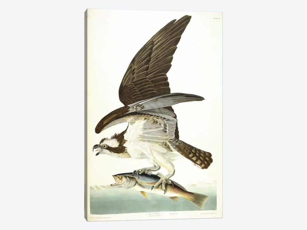 Fish Hawk, 1830  by John James Audubon 1-piece Canvas Wall Art