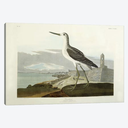 Greenshank, View of the St, 1835  Canvas Print #BMN6028} by John James Audubon Canvas Art Print