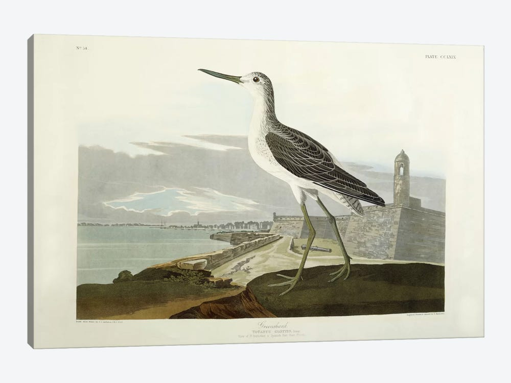 Greenshank, View of the St, 1835 by John James Audubon 1-piece Canvas Art Print