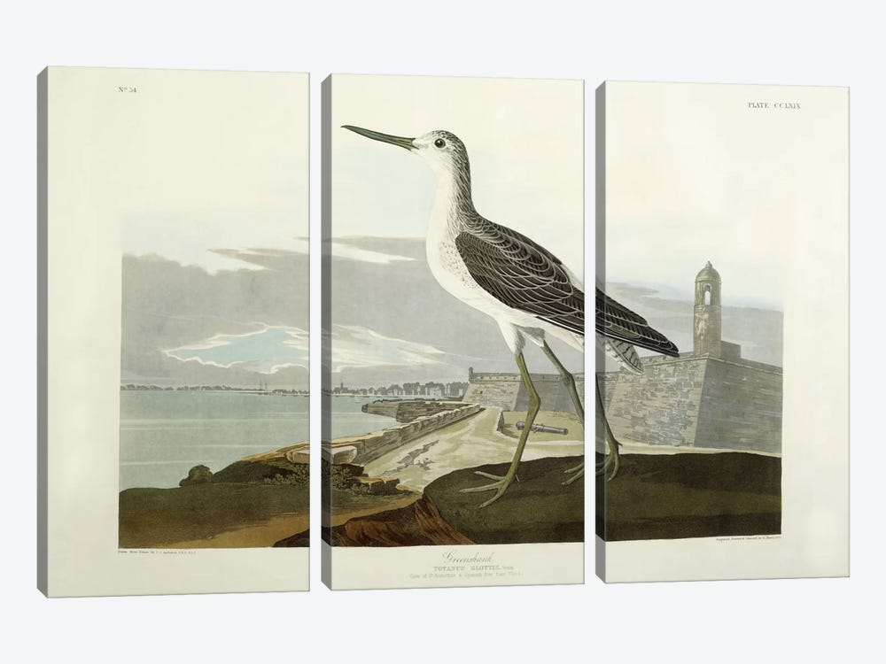 Greenshank, View of the St, 1835 by John James Audubon 3-piece Canvas Art Print
