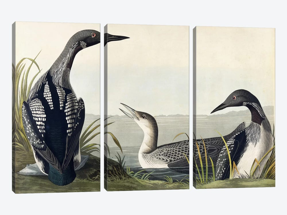 Black-throated Diver 3-piece Canvas Art