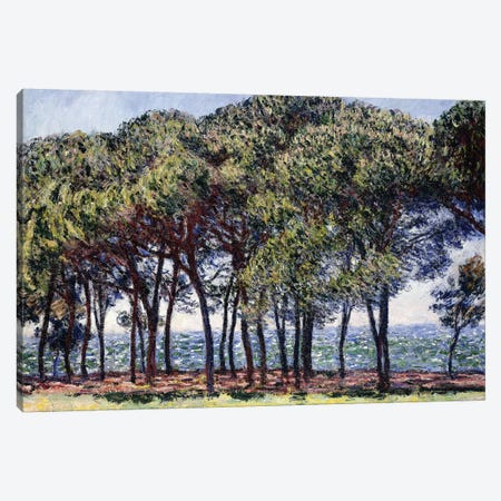 Pines, Cap d'Antibes, 1888  3-Piece Canvas #BMN6042} by Claude Monet Canvas Print