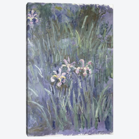 Iris, c.1914-1917  Canvas Print #BMN6044} by Claude Monet Canvas Wall Art