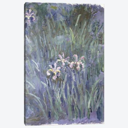 Iris, c.1914-1917  Canvas Print #BMN6044} by Claude Monet Canvas Wall Art
