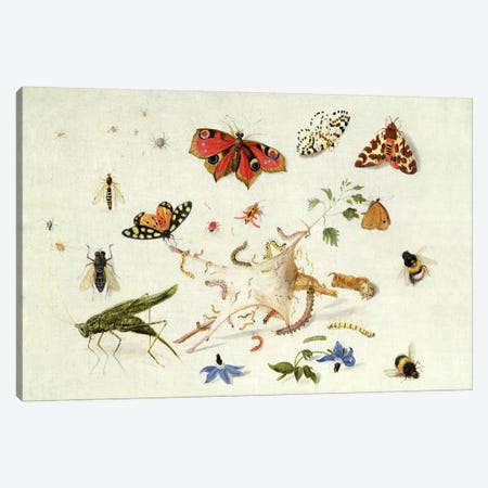 Study of Insects and Flowers  Canvas Print #BMN606} by Ferdinand van Kessel Canvas Print