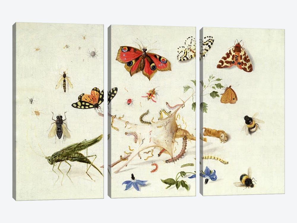 Study of Insects and Flowers  by Ferdinand van Kessel 3-piece Canvas Art Print