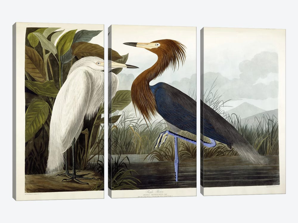 Purple Heron, c.1835  by John James Audubon 3-piece Canvas Art