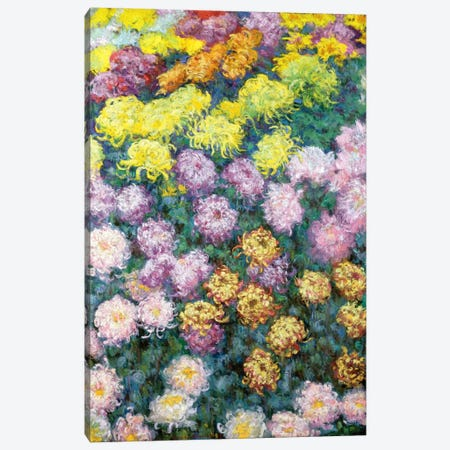 Massif de Chrysanthemes, 1897  Canvas Print #BMN6095} by Claude Monet Canvas Print
