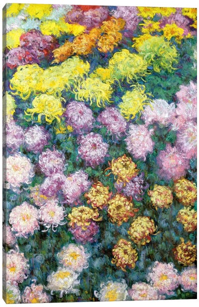 Massif de Chrysanthemes, 1897  Canvas Art Print