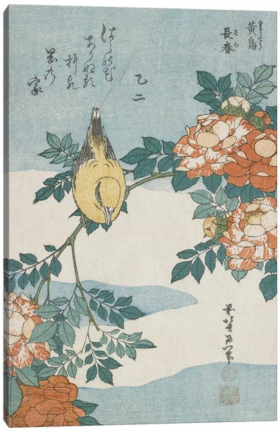 Black-Naped Oriole And China Rose, c.1833 Canvas Art Print