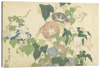 Frog And Morning Glories, c.1832 Canvas Art Print