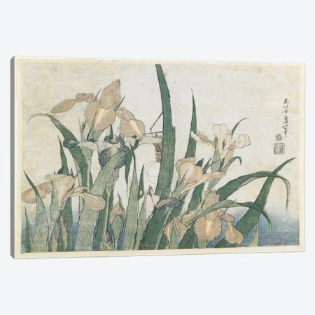 Iris Flowers And Grasshopper, c.1830-31 Canvas Print #BMN6393} by Katsushika Hokusai Canvas Print