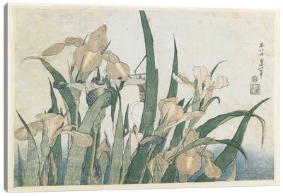 Iris Flowers And Grasshopper, c.1830-31 Canvas Art Print