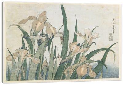 Iris Flowers And Grasshopper, c.1830-31 Canvas Art Print