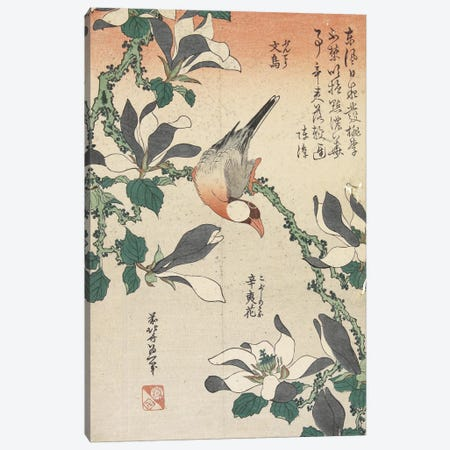 Java Sparrow And Magnolia Canvas Print #BMN6394} by Katsushika Hokusai Canvas Art
