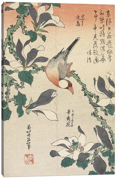 Java Sparrow And Magnolia Canvas Print #BMN6394