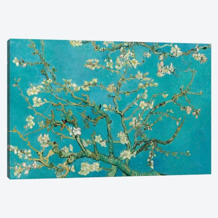 Almond Blossom, 1890 Canvas Print #BMN6428} by Vincent van Gogh Canvas Art Print