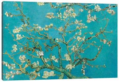 Almond Blossom, 1890 Canvas Art Print