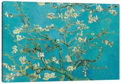 Almond Blossom, 1890 Canvas Art Print
